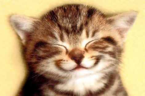 rövid idézetek a mosolyról х·Ж·х..Idézetek A Mosolyról ..х·Ж·х..